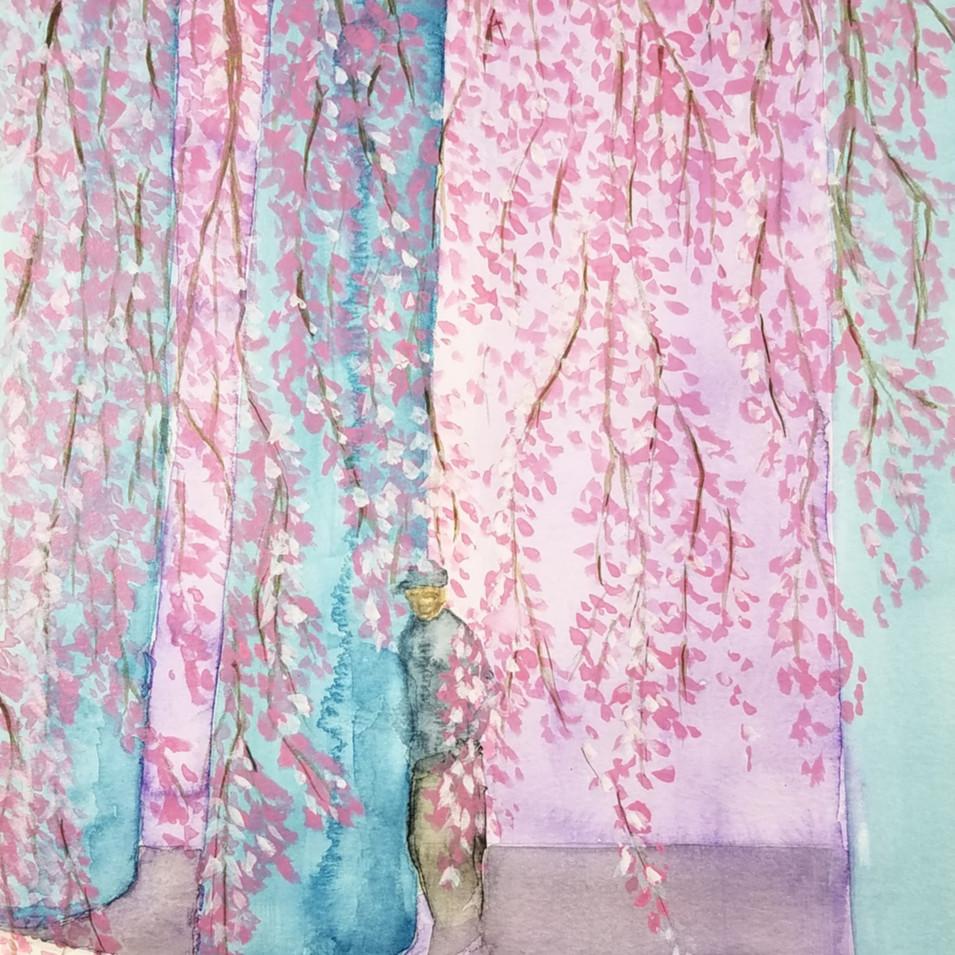 Cherry Blossoms @MIT