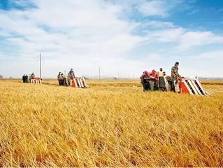 提高農業競爭力須夯實現代農業基礎