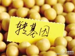 """農業部給出轉基因產業化路線圖:口糧作物繼續被""""雪藏"""""""