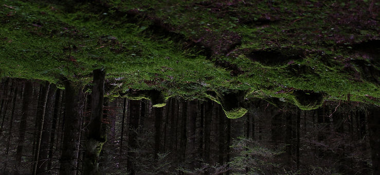 roots upside down.jpg