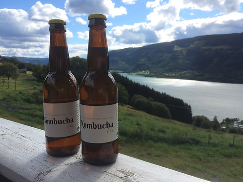 Kombucha - 12 flasker.