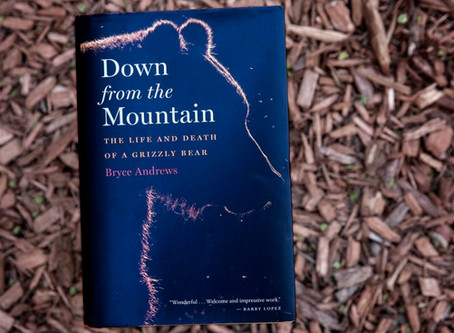 Bryce Andrews: Down from the Mountain