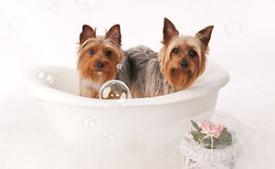 Dog Grooming | Baths | Spa