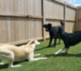 Outside pet area | Play Area | Outdoor potty