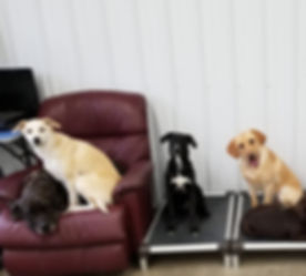 Indoor Doggy Day Care | Play Area