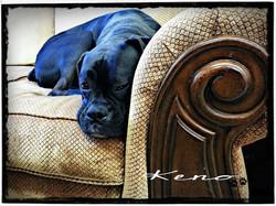 Keno | Boxer | Dog