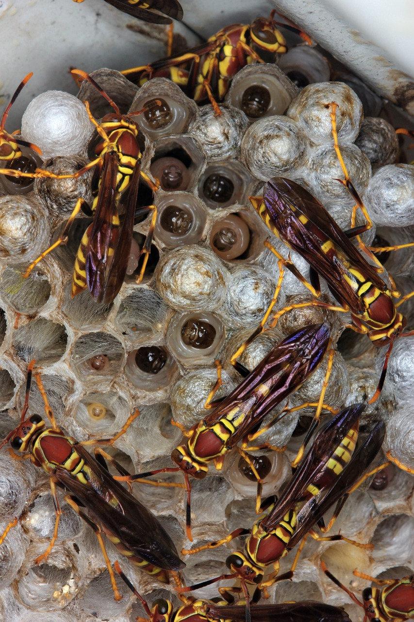 Pest Control Inspection