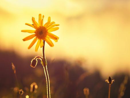 S E P T E M B E R . . . Flower power!