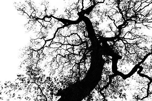 Ink Tree print