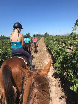 Vineyard  Horse Riding