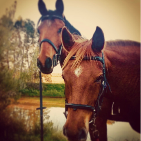 Finlay is the bravest kindest horse you will ever meet!