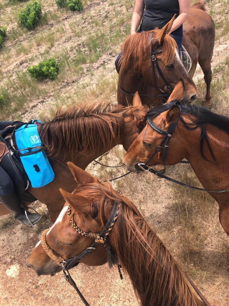 Horse riding in Cape Towns, Stellenbosch Winelands