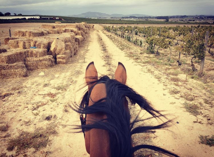 Vineyard Trail Ride