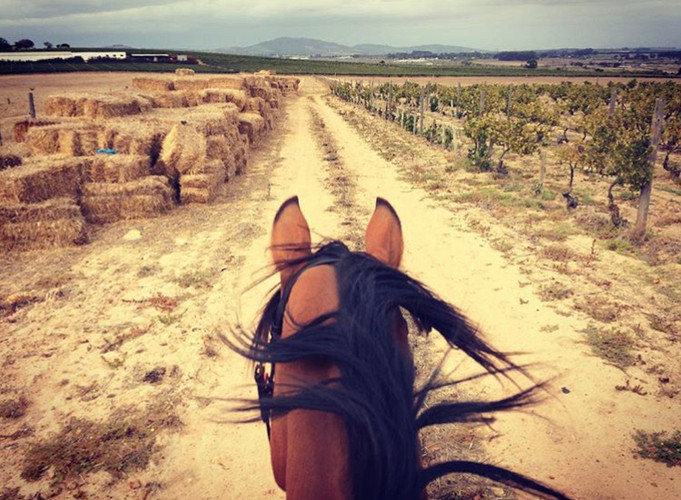 horseback riding in the Cape Winelands