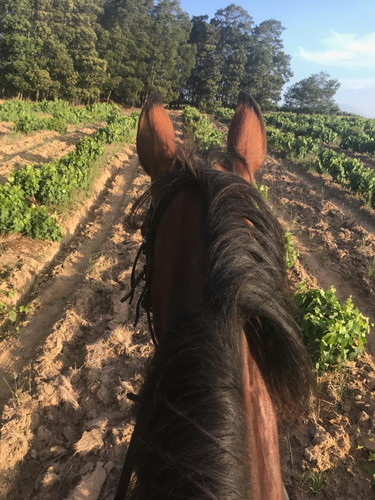 Horse Riding & Wine Tasting Cape Town