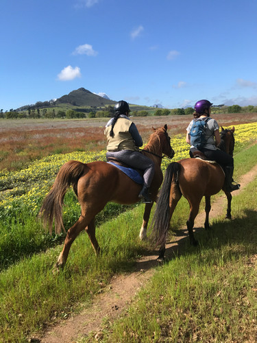 Stellenbosch Horse Riding