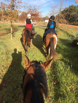 forest horse riding trails