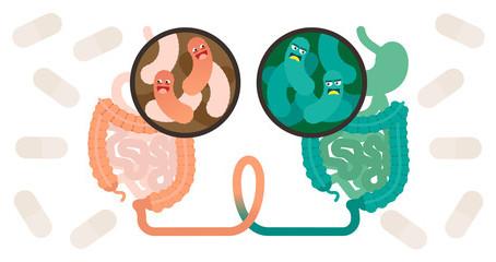 Le cycle entéro-hépatique: l'allié de votre immunité