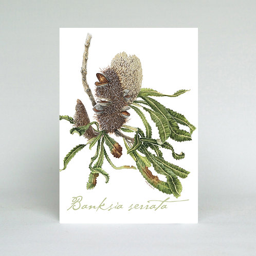 Banksia serrata Greeting Card