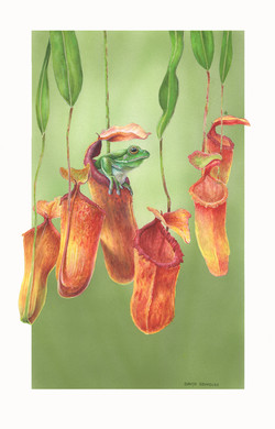 Frog and Pitcher Plants