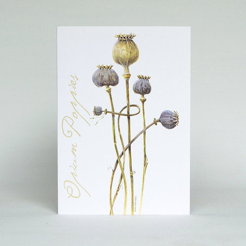 Poppie Seeds Greeting Card