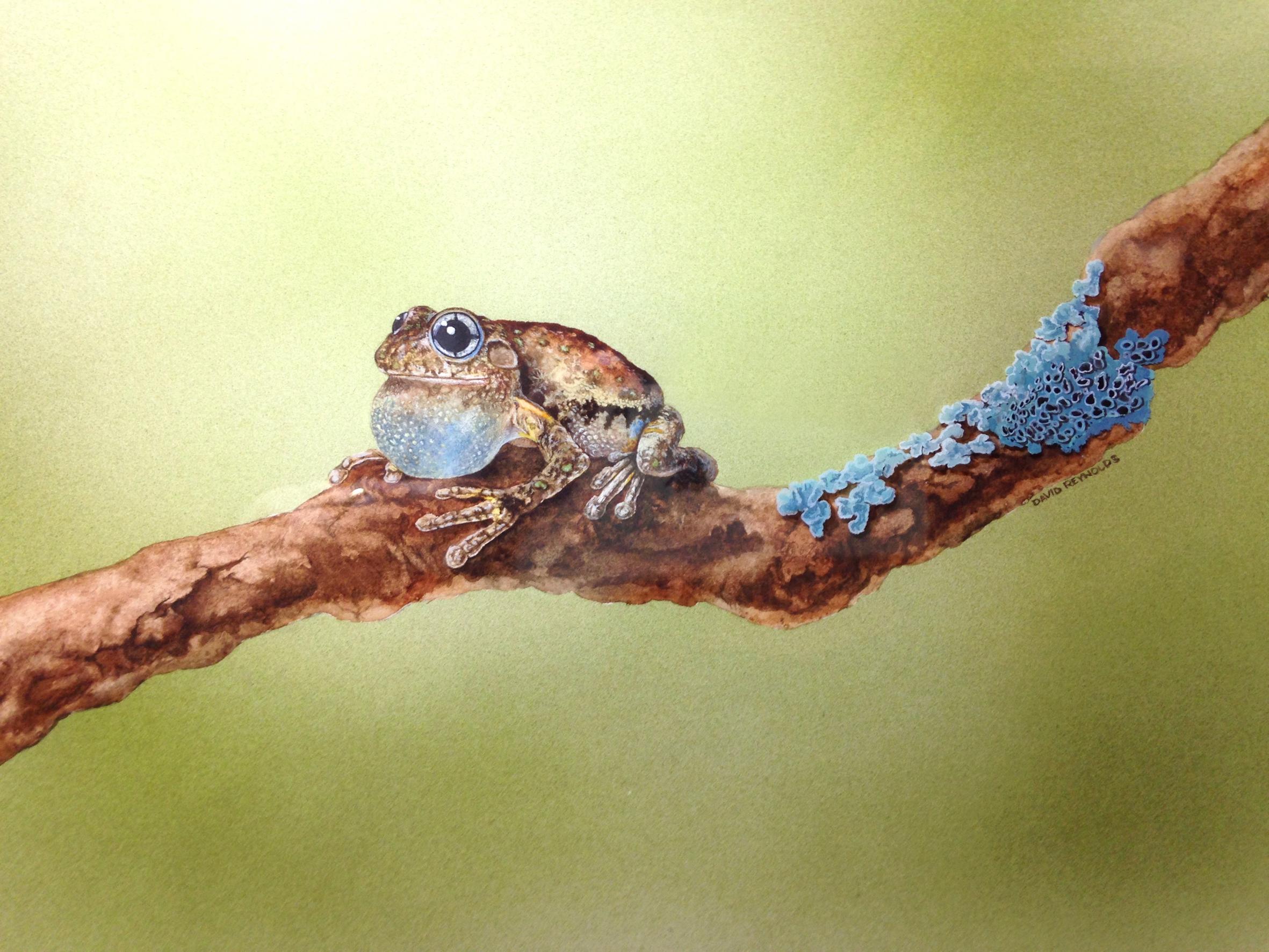 Perons Frog