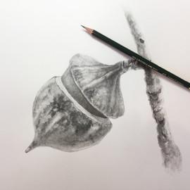Flowering Gum - Graphite