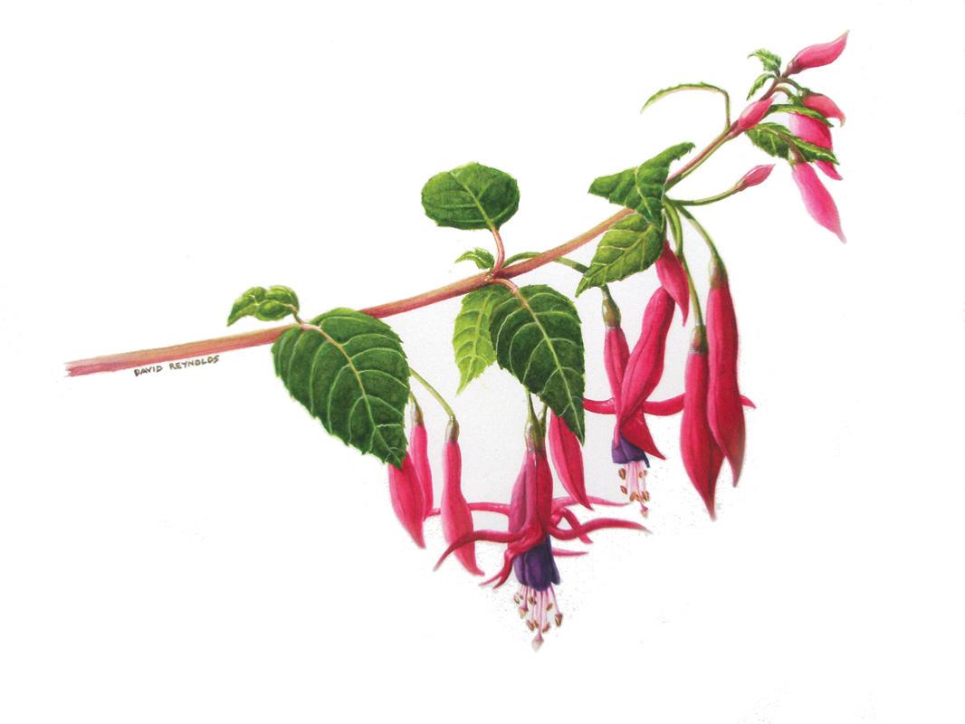 Pink Fushcia