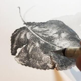 WIP - Pyrus leaf - Graphite