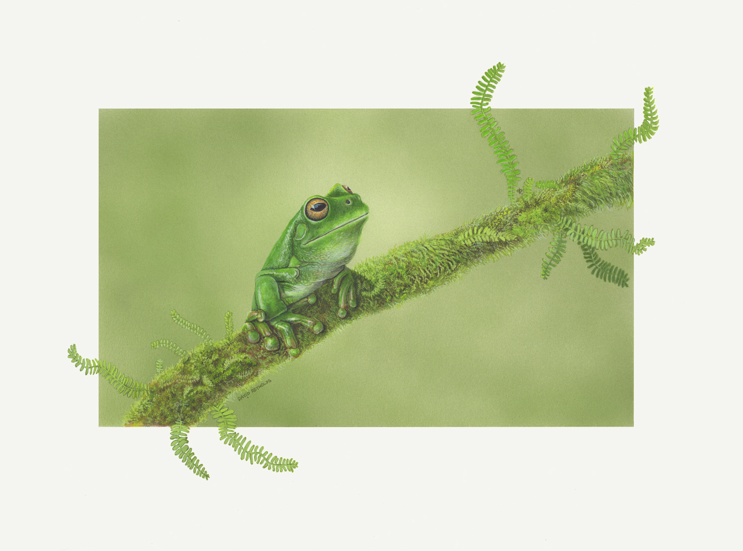 White-Lipped Green Tree Frog Fern