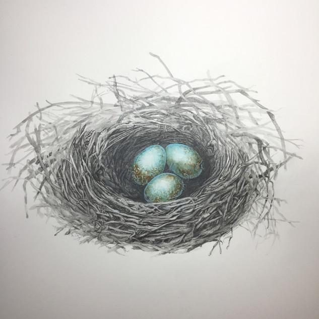 Birds Nest WIP - Graphite