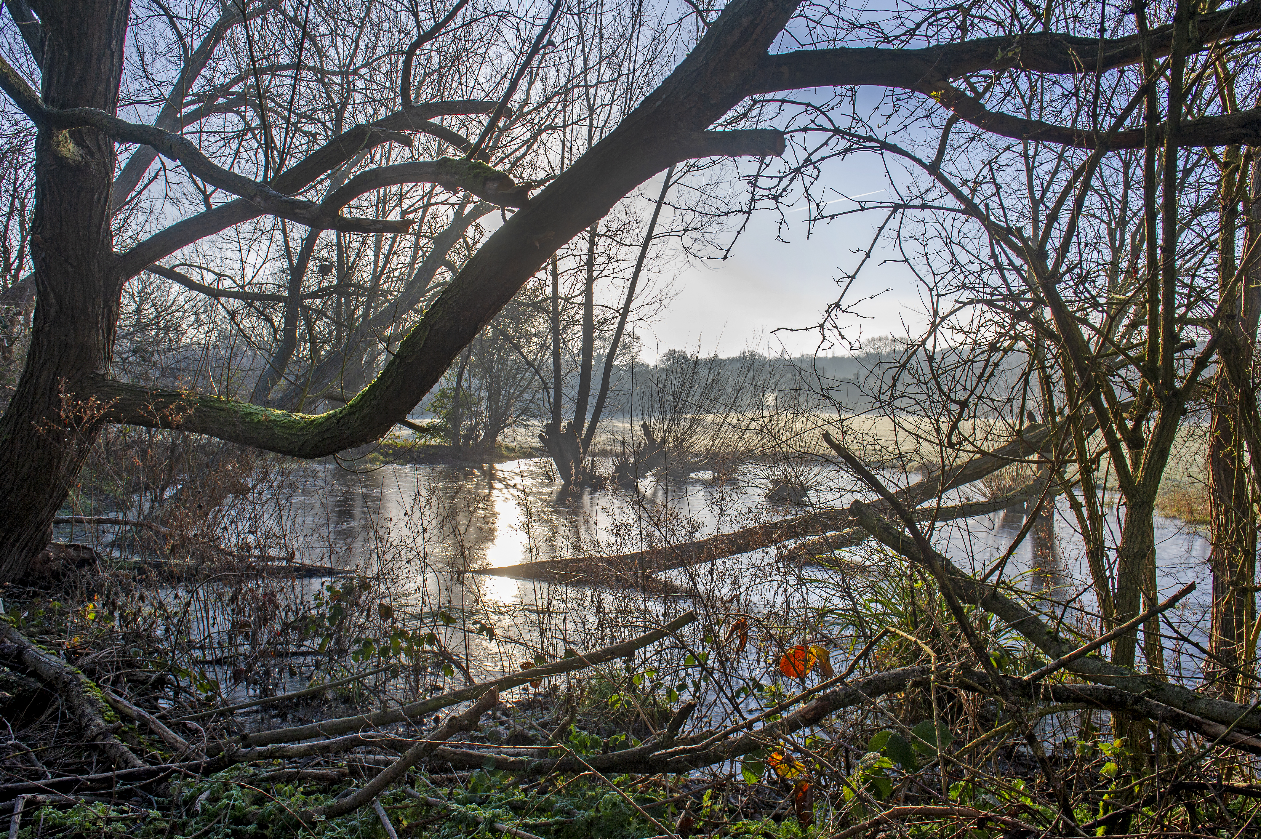Fryant country park