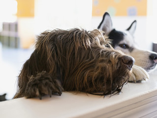 6 Low-Cost Ways to Care for Your Pet While You're Away