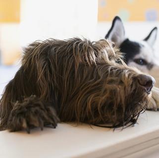 Mascotas: Proteína hidrolizada para una mejor salud