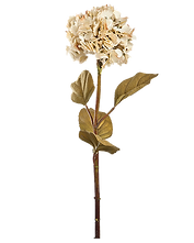 dry-flower.png