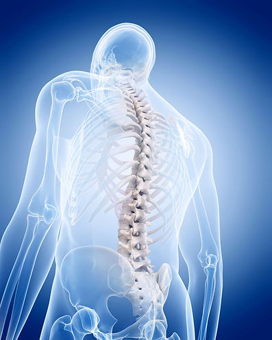 craniosacral spine.jpg