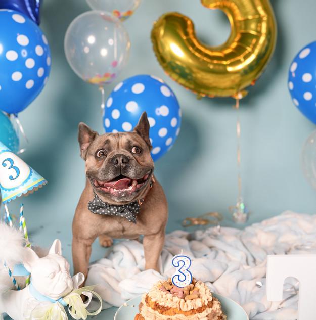Happy Birthday Furbaby!