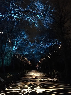 Lanterns at Chester Zoo2.jpg