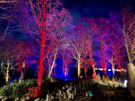 Knowsley Enchanted 2020 Woodland