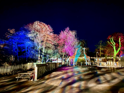 Enchanted Knowsley 2020