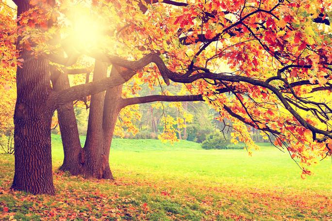 秋は食事と運動を