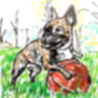frenchbulldog_drawing.jpg.jpg