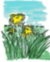 dandelions_drawing.jpg.jpg