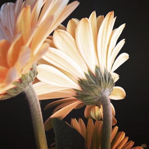 Poster flores / Fine Arte