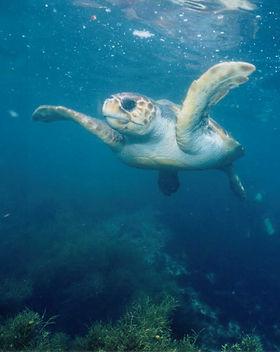Minamicho Sea Turtle.jpg