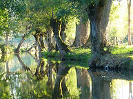 Les canaux du Marais Poitevin