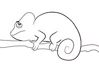 Simple-Chameleon-Coloring-Pages.jpg