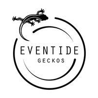 Eventide_Geckos.jpg