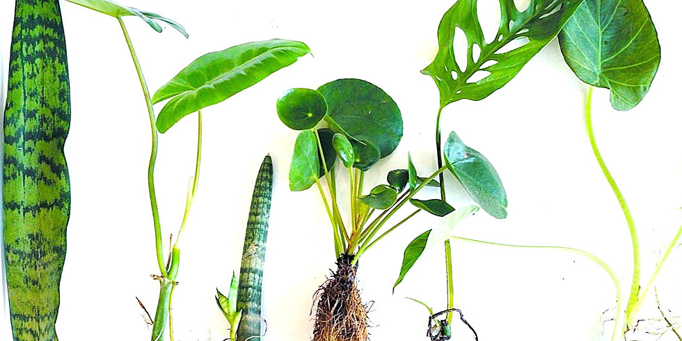 Intro to propagations