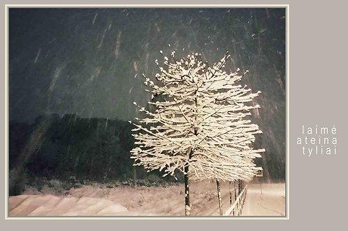 BALTAS MEDELIS / WHITE TREE / 10x15 cm